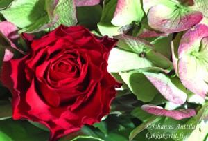 Ruusu ja hortensia 4015